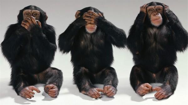 cimpanzei maimute