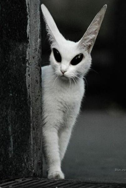 292-pisica_extraterestru