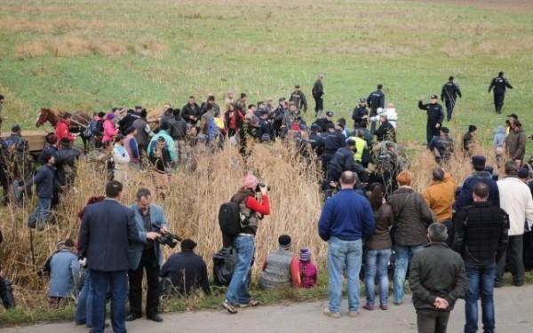 """Bizoni """"de veghe în lanul de secară"""" gazoasă de la Pungești, comuna Gazprom"""